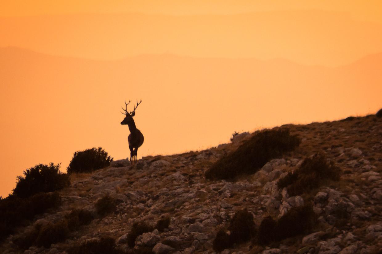 wildlife reserve boumort red deer