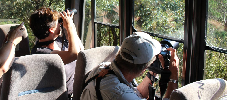 wildlife watching safari boumort pyrenees