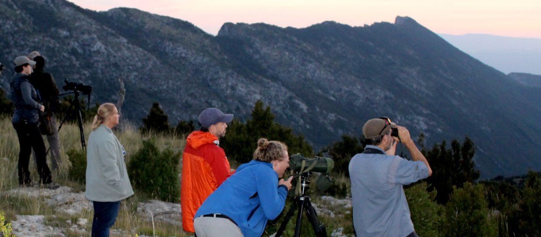 wildlife watching boumort pyrenees